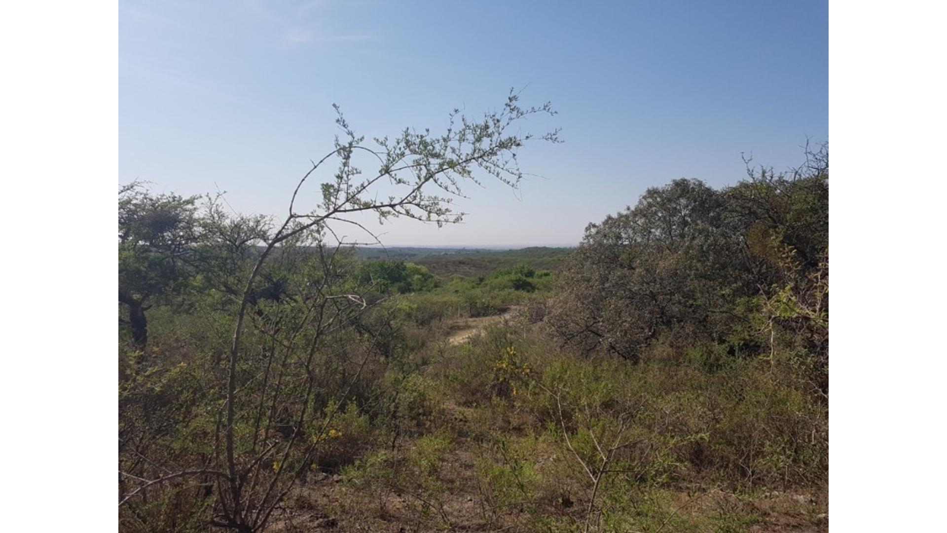 Pozo Del Tala 100 - U$D 75.000 - Campo en Venta