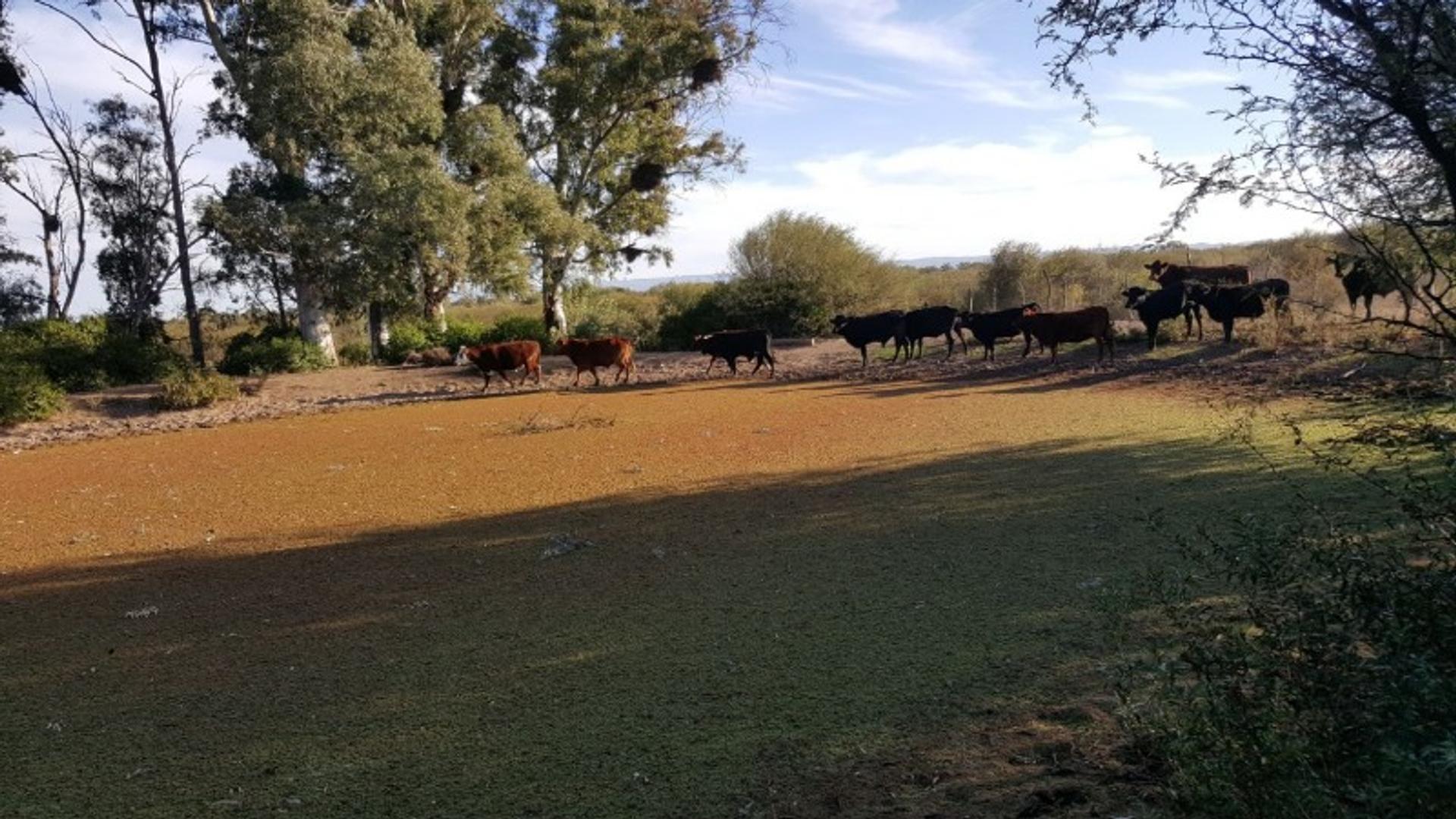 BaÑado De Soto 100 - U$D 750.000 - Campo en Venta