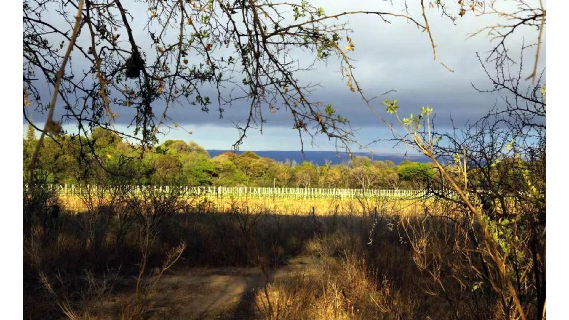La Chacra, La Paz, San Javier, Ruta 14 100 - U$D 157.000 - Campo en Venta